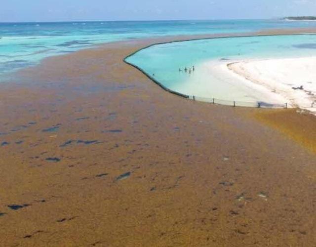 Riviera Maya: instala barrera anti sargazo la mayor cadena mexicana |  Noticias de turismo REPORTUR